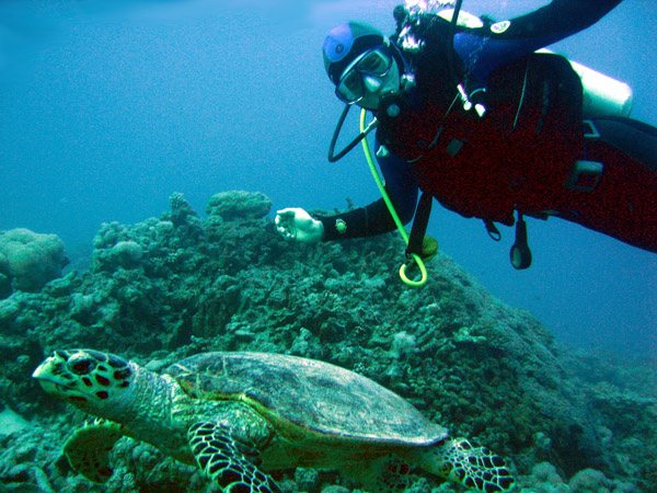 Marsa Alam Tours, Marsa Alam Excursions, Day Trips & Things to do