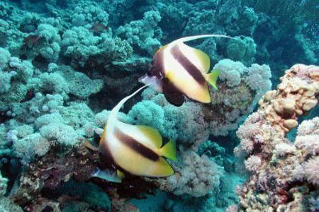 Sharm egypt, Red Sea Diving