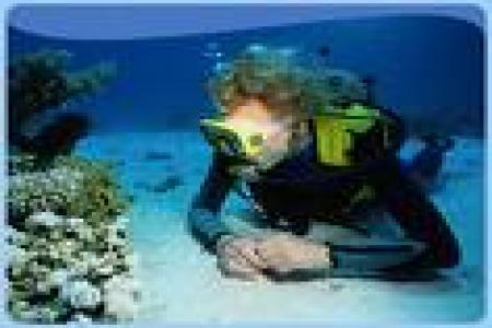 Diving a Sharm El Sheikh